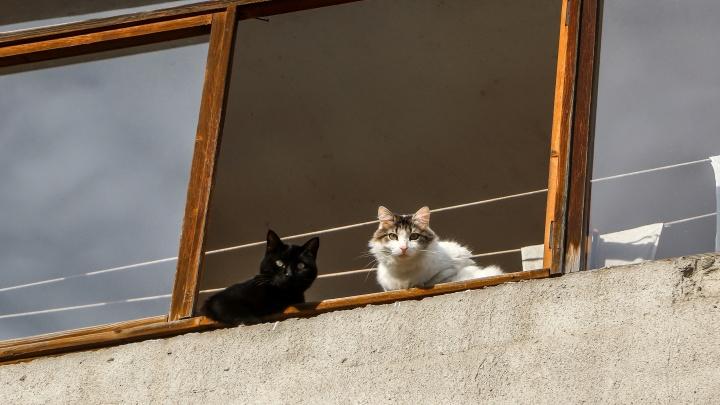 Нижний Новгород стал самым комфортным городом России для поиска жилья в аренду с животными