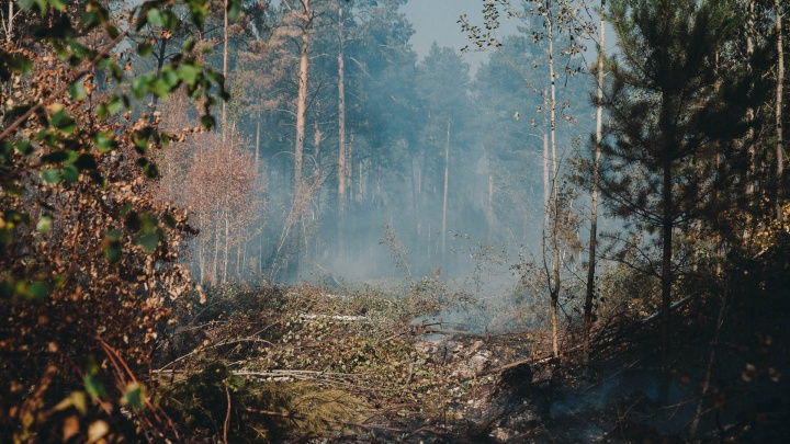 Жар идет из-под земли: как выглядят торфяные пожары под Тюменью и почему их почти нельзя потушить