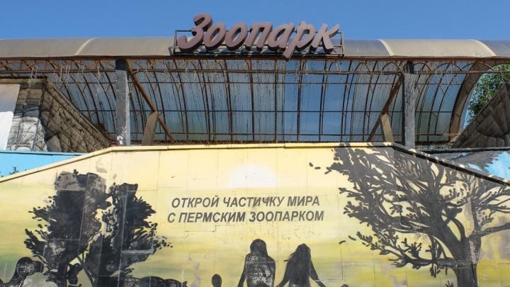 В Перми первоклассники смогут посетить зоопарк бесплатно