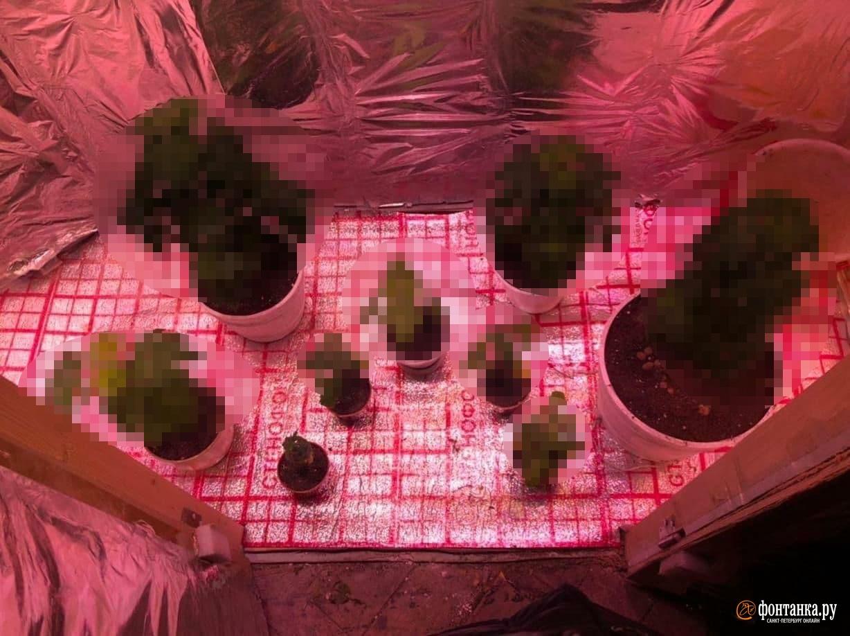 В мастерской выращивали непонятные растения