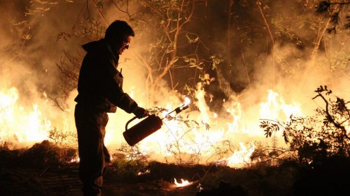 Под Екатеринбургом поджигают лес, чтобы спасти сады от пожара: фоторепортаж