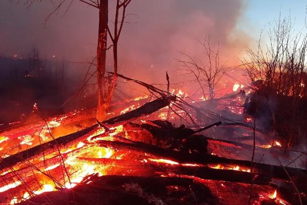 Поваленный лес горел до позднего вечера