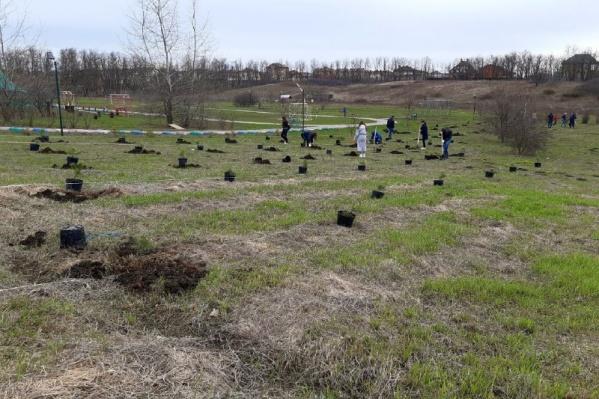 Праздник древонасаждения в Ростовской области отмечают осенью и весной