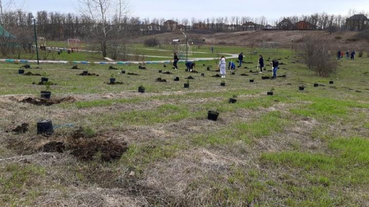 Зеленый день: в Ростове прошел праздник древонасаждения