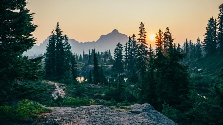 Zewa и «Пятёрочка» запустили совместную экоакцию, чтобы проявить заботу о лесе мог каждый
