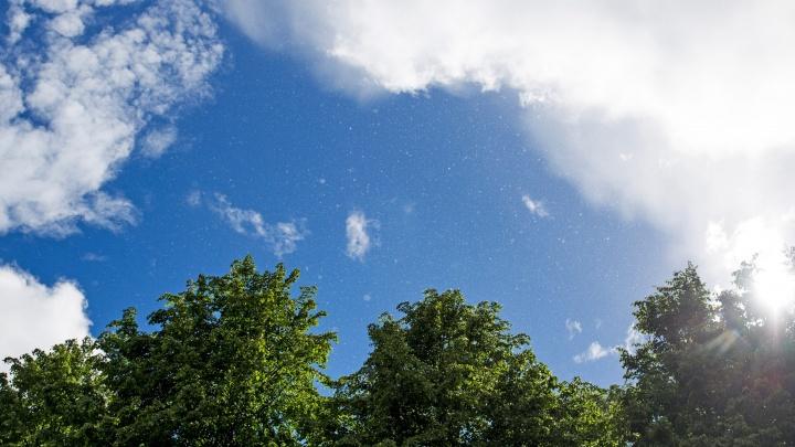 «Ветреная и изменчивая»: синоптики рассказали, какую погоду ждать Ярославлю