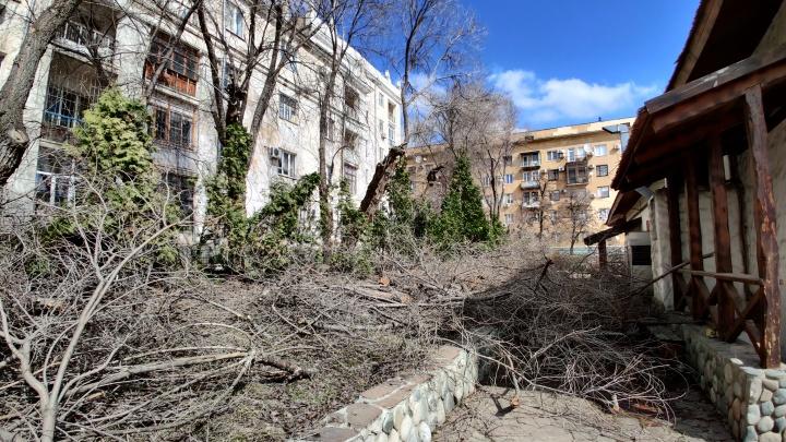«Они угрожали расправой моей собаке»: в центре Волгограда рабочих застали за обрезкой деревьев у ресторана