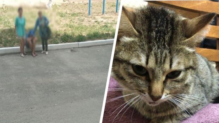 """«Мальчик кричал """"Помогите!"""", а рядом котенок бился в судорогах»: на Урале семейный конфликт закончился живодерством"""
