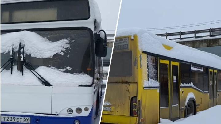 Какие автобусы поедут по Ярославлю после транспортной реформы: эксклюзивное видео