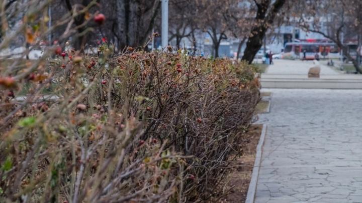 Туман и ночные заморозки. Синоптики рассказали о погоде в Прикамье на неделю