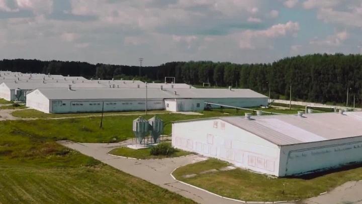 Птицефабрику под Челябинском оштрафовали на 200 тысяч рублей за куриный помет на полях