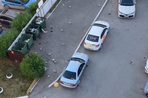 С четырех утра начинают орать: в Тюмени чайки массово атаковали мусорные баки и мешают спать людям