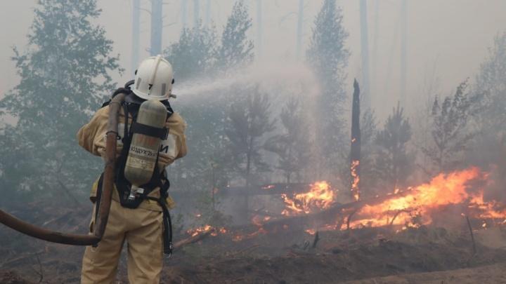 Горит шестой день. Пожар из заповедника в Мордовии распространился на Саров