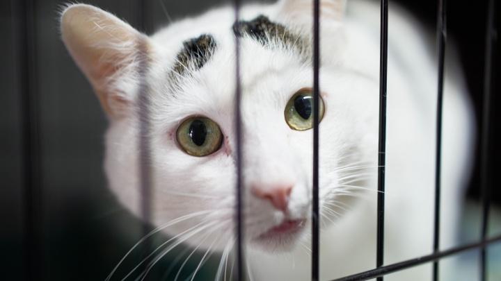 «Ноша — неподъемная»: северодвинка много лет спасает кошек и собак, которых предали. Сейчас их 250