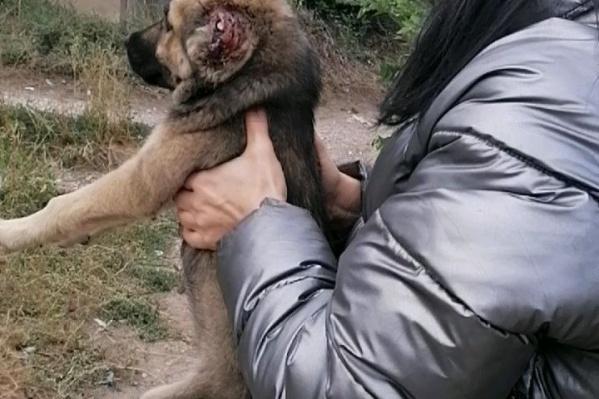 Преступник ножницами отрезал хвосты и уши щенкам