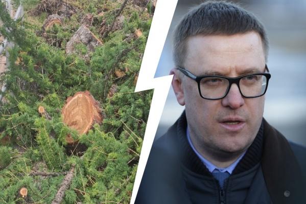 Губернатор отметил, что у даурских лиственниц была красивая история