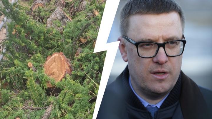 Текслер пообещал провести расследование вырубки столетних лиственниц в центре Челябинска