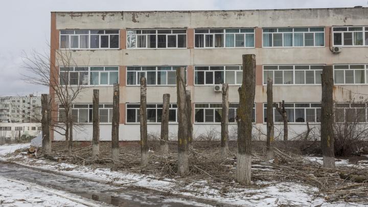 «Кто-то явно заразился дендрофобией»: в Волгограде школу освободили от деревьев, чтобы они не рухнули на учителей и учеников