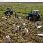 Скинемся на борщ? Почему в России даже в сезон урожая продолжают дорожать овощи