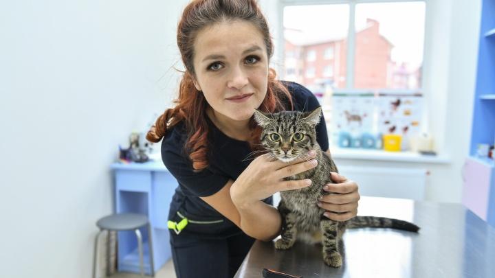 Бизнес в декрете: беременная екатеринбурженка продала свой байк, чтобы лечить животных