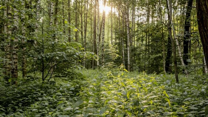 В Ярославской области жителям снова запретили ходить в лес: нарушителей будут штрафовать