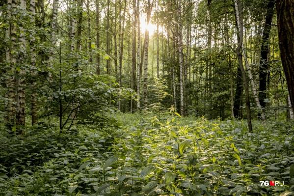 За поход в лес в Ярославской области будут штрафовать