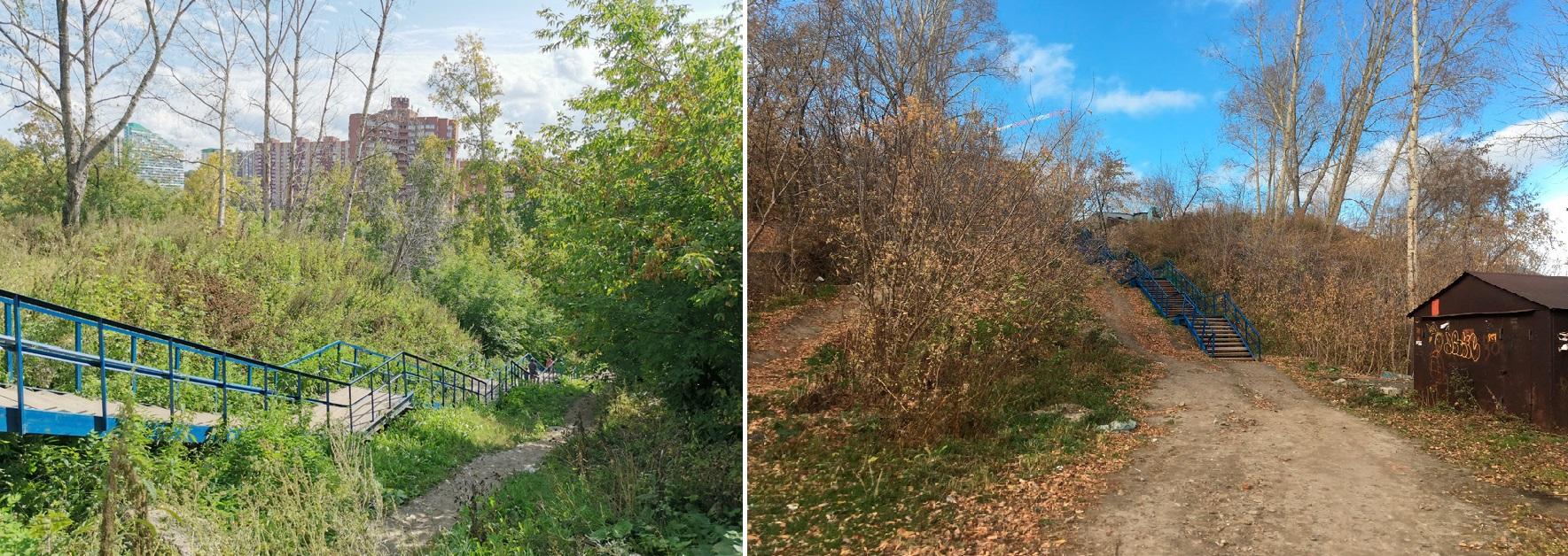 В северной части парка, сегодня заросшей кленом, исторически был хвойный лес — его восстановят и дополнят лиственницами