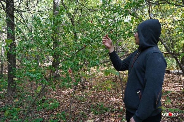 Прогулка по лесу теперь не грозит штрафом