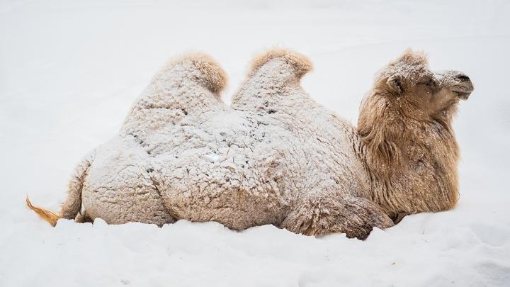Мокрые носы в сугробах: подборка милых фото животных из «Роева ручья»