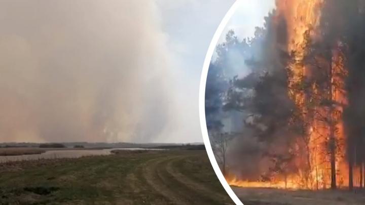 «Весь город и деревни рядом затянуло дымом»: под Камышловом горят леса. Видео