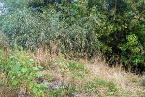 Тело 20-летней студентки из Воронежа было спрятано в поле