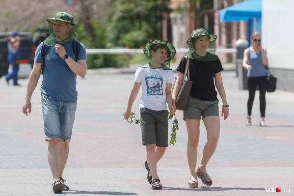 В Волгограде пик активности мошки. Она будет надоедать еще 7–10 дней