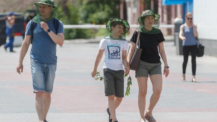 Нашествие мошки на Волгоград: ученые и экологи рассказали, чего ждать горожанам