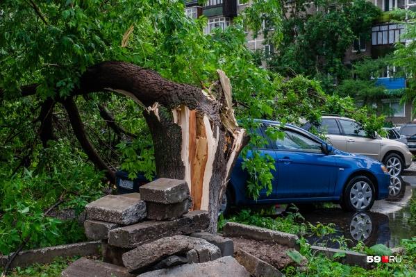 Сильный ветер может сломать даже дерево, которое со стороны кажется крепким