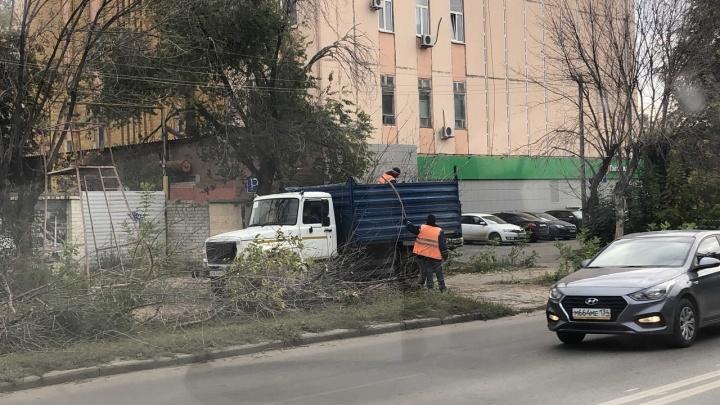 Они все заражены: в Ворошиловском районе вырубают старые ясени