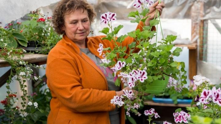 Особый грунт и умеренный полив: садовод рассказала о секретах выращивания бегонии в саду и в квартире