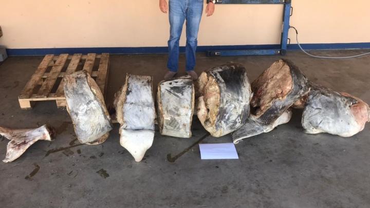 «Ущерб почти 14 миллионов рублей»: волгоградцы пошли под суд за покупку икряной белуги