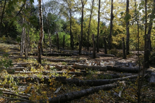 """Омичи <a href=""""https://ngs55.ru/text/gorod/2021/03/27/69834617/"""" class=""""_"""" target=""""_blank"""">жаловались на вырубки</a> в Советском парке. Перед этим они жаловались на аварийные деревья"""