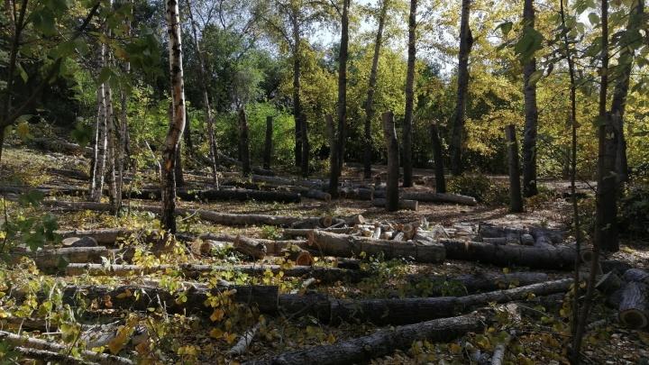 В Омске до конца года пообещали высадить более двух тысяч деревьев