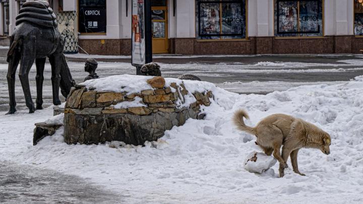 «Экскрементальная» площадка: почему Челябинск тонет в собачьем дерьме, а чиновники пожимают плечами