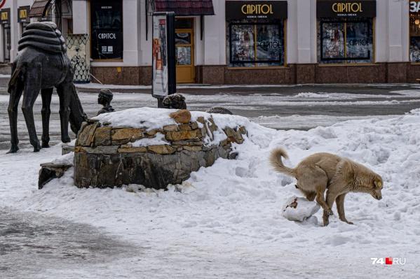 Собаки гадят даже в центре города