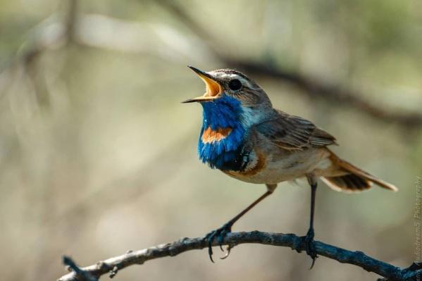 Фотографировать птиц очень сложно, потому что они расценивают фотоаппарат как угрозу