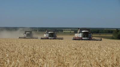В Зауралье с 27 июля введут режим ЧС. Это позволит компенсировать убытки аграриев