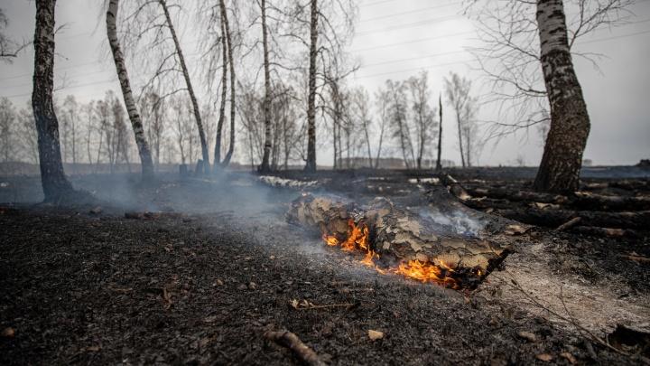Дымящиеся поля. 7фото с мест пожаров в Новосибирской области— смотрим, что оставил после себя огонь