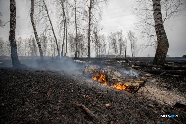 Можно сколько угодно пенять на ветер, который принес из Омской области смог от лесных пожаров, однако очевидно, что обстановка в нашем регионе тоже далека от идеала, а новые термические точки появляются на карте области регулярно
