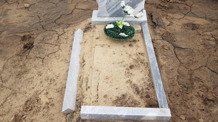 В Волгоградской области коровы разгромили сельское кладбище
