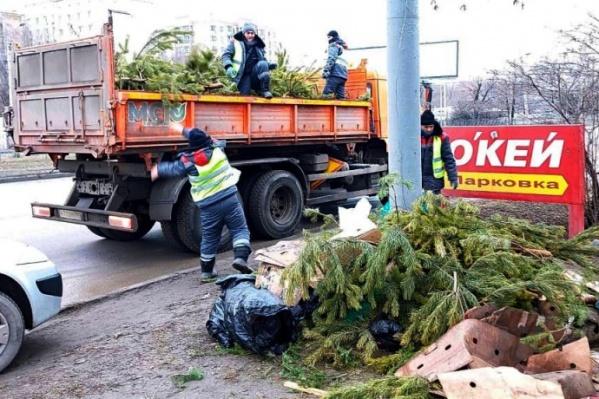 На улице Малиновского оказались три стихийные хвойные свалки