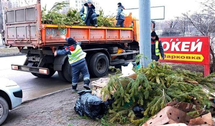 В Ростове убрали стихийные свалки из нераспроданных елок. Деревья отдали зоопарку