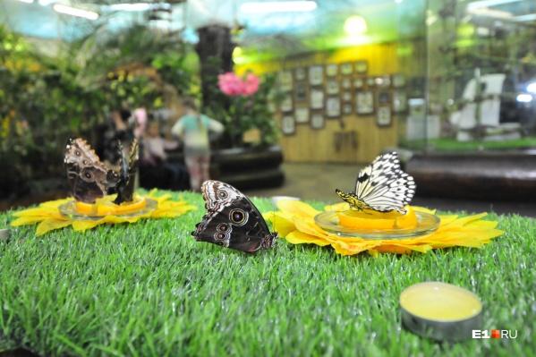 Последние годы «Парк бабочек» не приносил прибыли