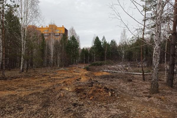 """Местные жители предполагали, что деревья вырубали либо под дорогу к новостройке на Хариса <nobr class=""""_"""">Юсупова, 85</nobr>, либо еще под один дом в лесу"""